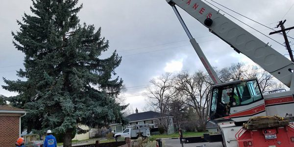 Crane Assisted Removals