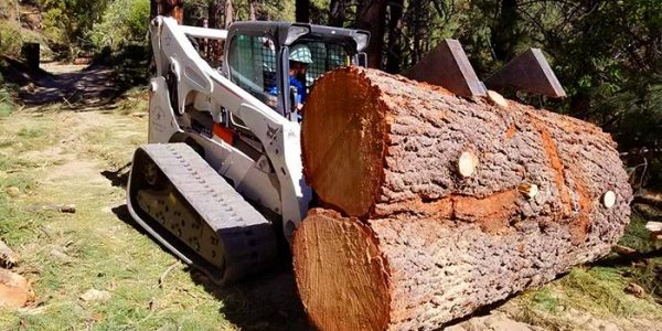 Large Tree Removal Services