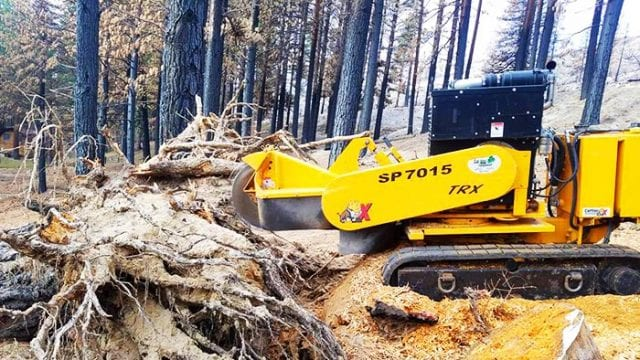 Stump Grinding, northern nevada tree care service, arborist tree services