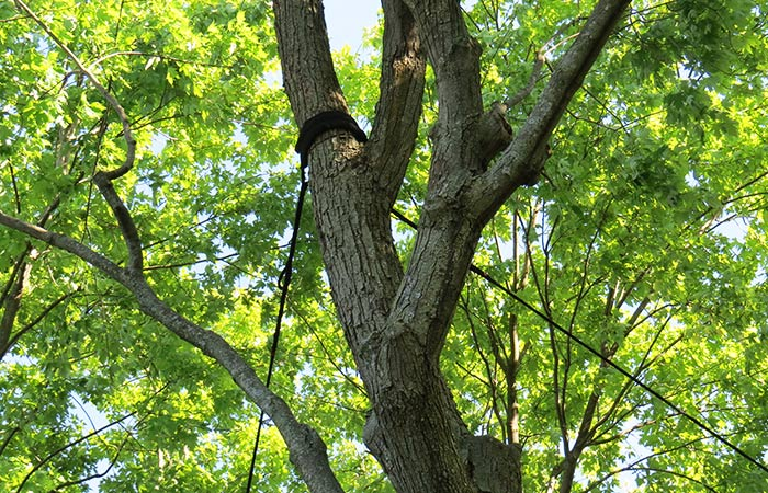 Cabling & Bracing Reno, northern nevada tree care service
